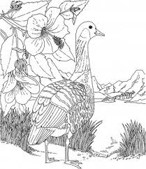 Barbie of Swan Lake Coloring Picture 4