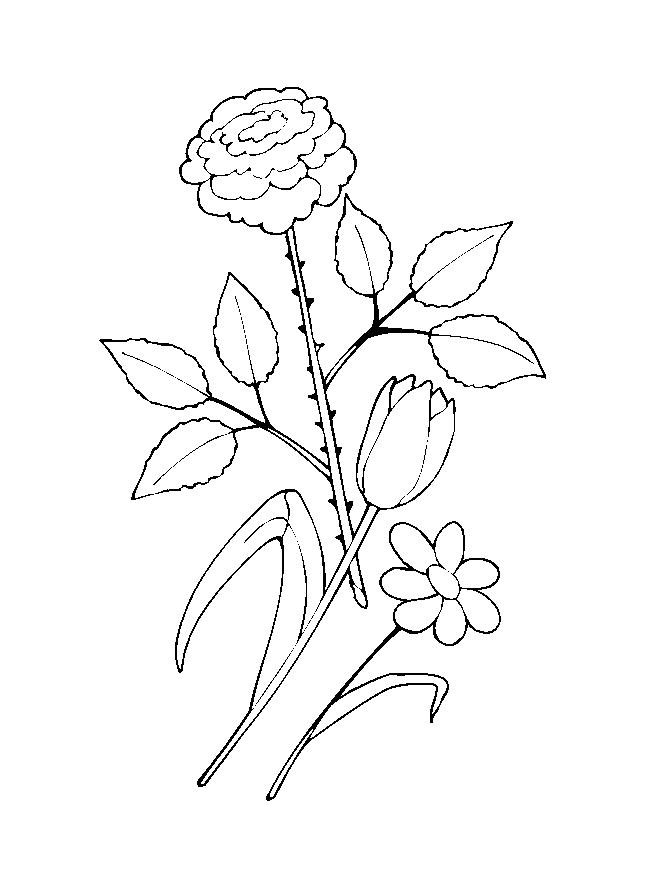 Flower Coloring Picture 2