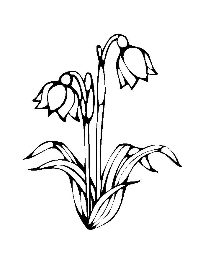 Flower Coloring Picture 3
