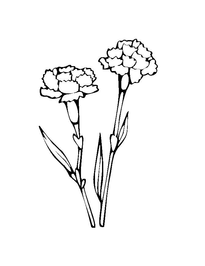 Flower Coloring Picture 8