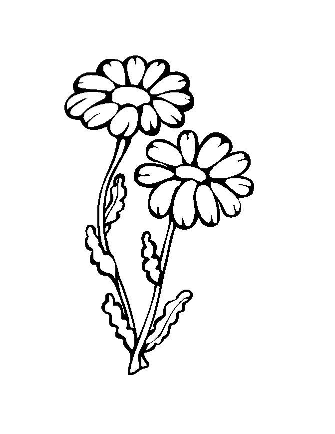 Flower Coloring Picture 9